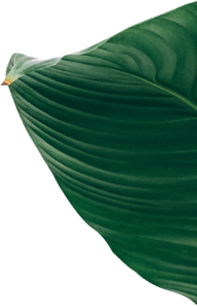The green foliage down